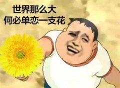 世界那么大,何必单恋一支花