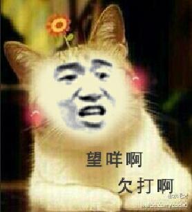 小猫头上一朵花:望咩啊 欠打啊