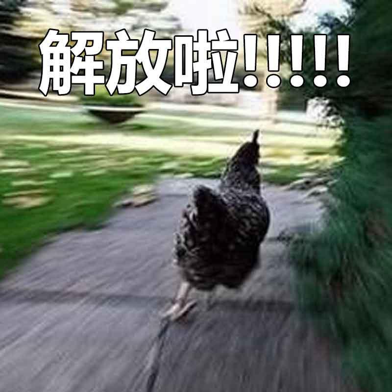 解放啦!!!!(鸡鸡)