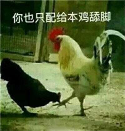 你也只配给鸡舔脚