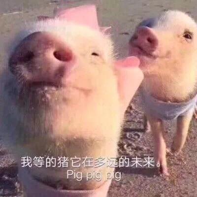 我等的猪它在多的未来 Pig pig pg
