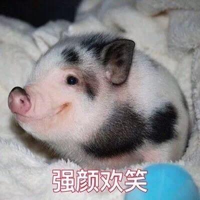 强颜欢笑 - 小猪猪