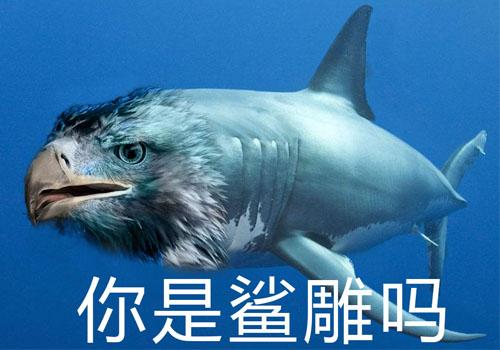 你是鲨雕吗