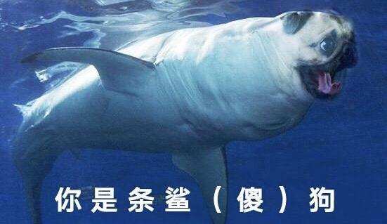 你是条鲨(傻)狗