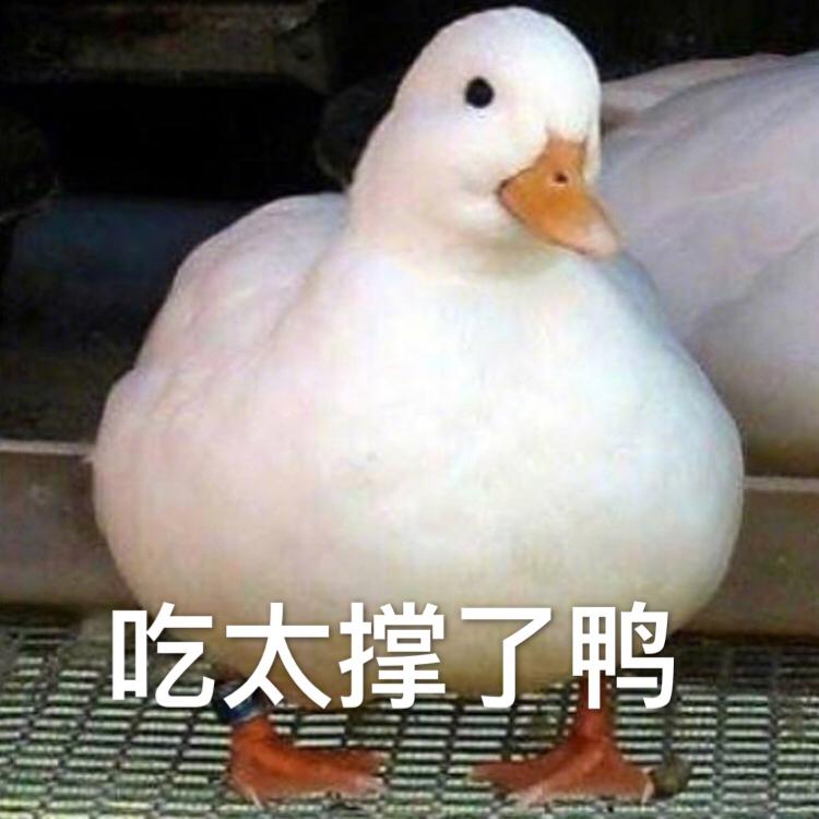 吃太撑了鸭