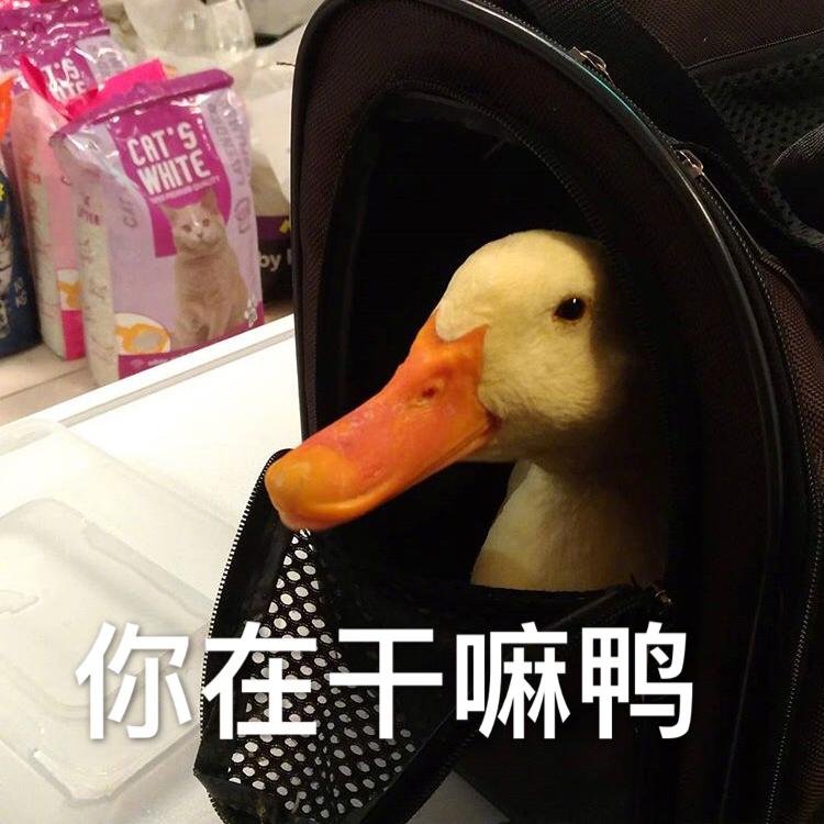 你在干嘛鸭
