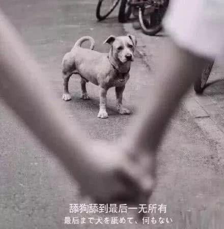 舔狗舔到最后一无所有