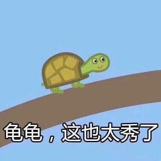 龟龟这也太秀了