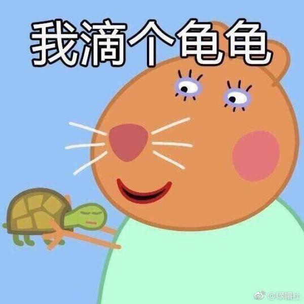 我滴个龟龟