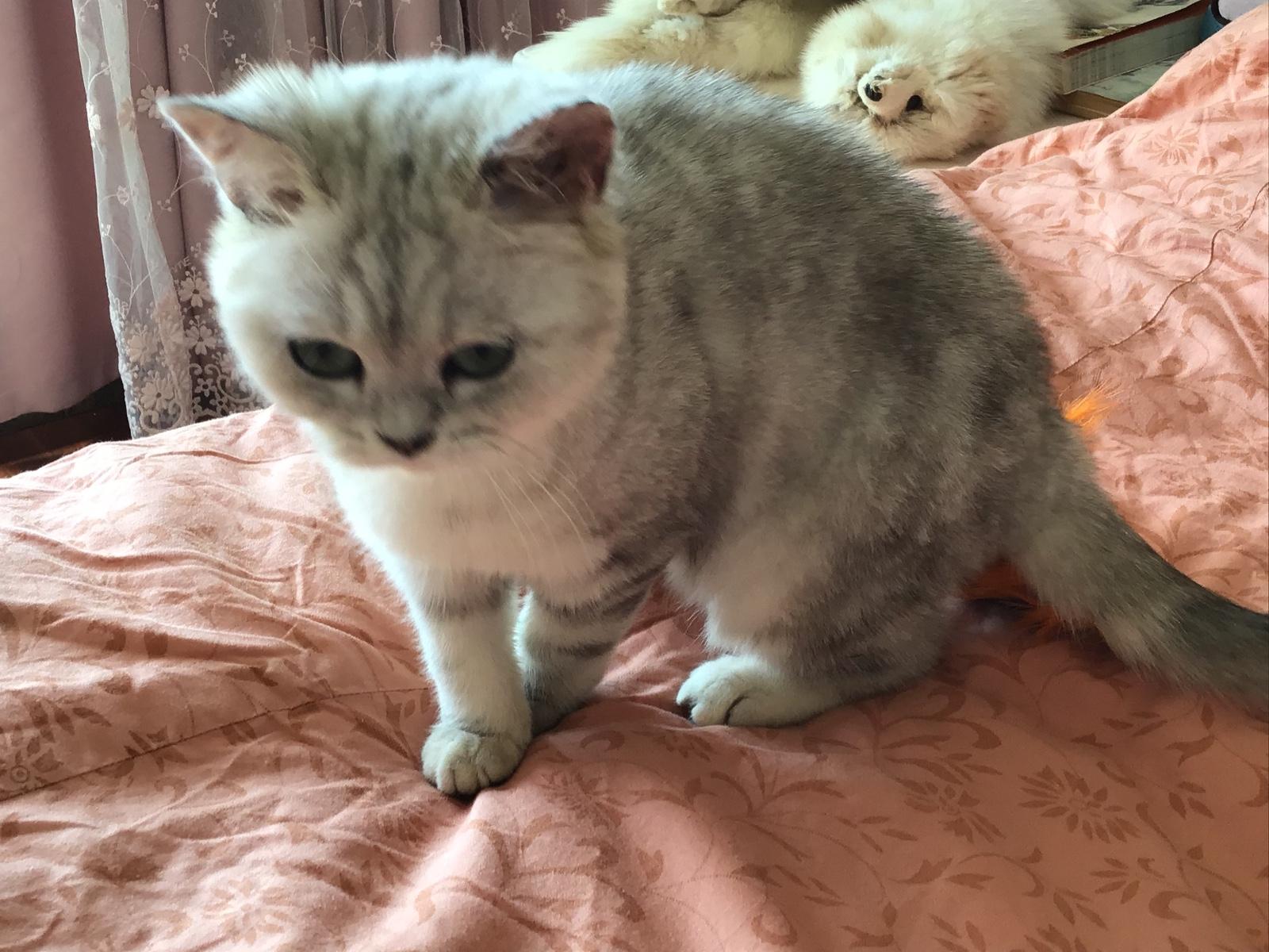 可爱猫咪表情包