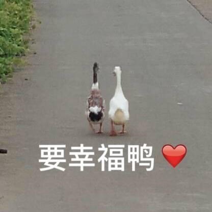 要幸福鸭◇