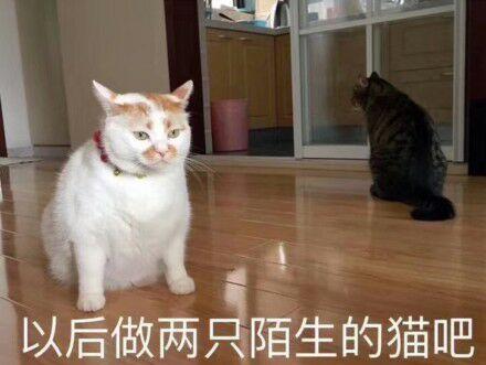 以后做两只陌生的猫吧